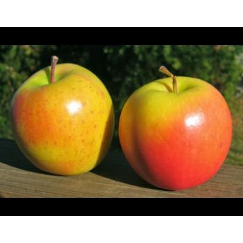 Manzanas - Gold Rush - 1 Kg