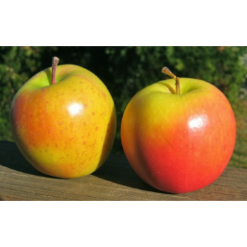 copy of Apple - Gold Rush -...